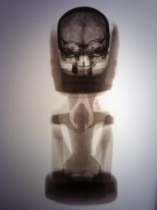 Radiographie d'une figure korwar avec son crâne, Baie de Geelvink, Nouvelle-Guinée occidentale (sous souveraineté indonésienne), vers 1800-1900. H. : 48 cm. © Martin Doustar.