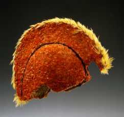 Casque (mahiole), Hawaii, XVIIIe siècle. Les casques collectés par Cook lors de son troisième voyage (1776-1780) présentent chacun une crête différente. Racines aériennes d''ie'ie (Freycinetia arborea), plumes et fibres. H. : 61 cm. Ex-coll. Cook/Forster (1776-1780). © Ethnologische Sammlung der Universität Göttingen. Inv. Oz 2457. Photo : Harry Haase.
